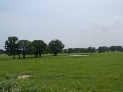 Athens Acreage For Sale: 6443 Fm 2495