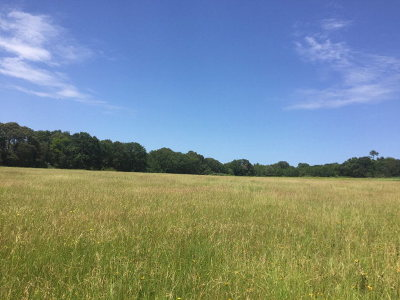 Athens Acreage For Sale: 8425 County Road 3713