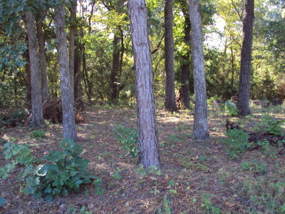 Murchison Residential Lots & Land For Sale: 191 Elm Street