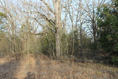 Residential Lots & Land For Sale: Lot# 419 Cortez