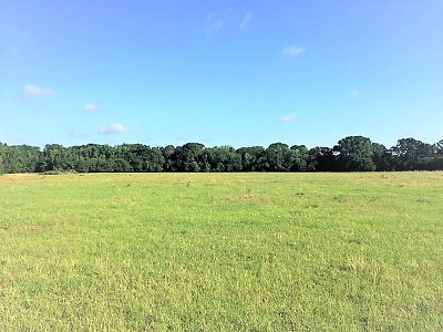 Athens Acreage For Sale: N Wood Street