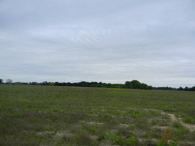 Brownsboro Acreage For Sale: County Road 3614
