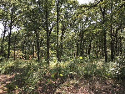 Residential Lots & Land For Sale: 149 Arbolado Blvd