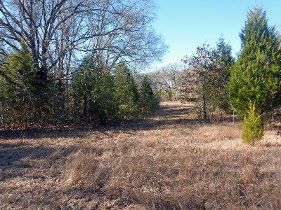 Acreage For Sale: County Road 1119