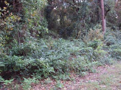 Murchison Residential Lots & Land For Sale: 426 Holly Glen