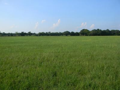 Athens Acreage For Sale: 7720 Fm 317