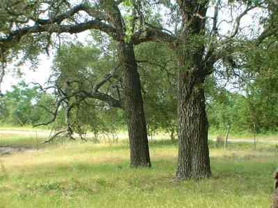 Burnet Farm & Ranch For Sale: 1019 Fm 3509