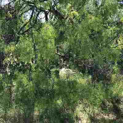 Granite Shoals Residential Lots & Land For Sale: Lots 176-180 E Pine
