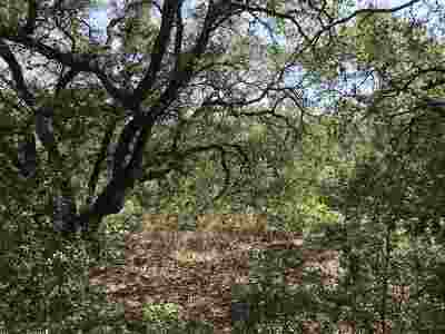 Spicewood Residential Lots & Land For Sale: Songwood