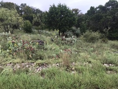 Horseshoe Bay Residential Lots & Land For Sale: 20372 Fallow
