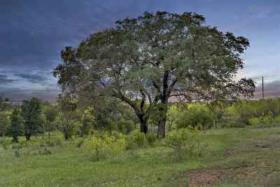 Spicewood Residential Lots & Land For Sale: Rockvale