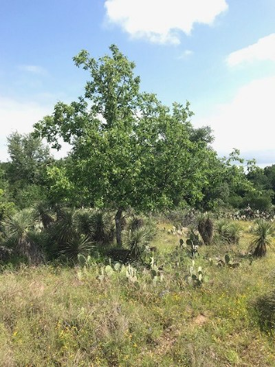 Granite Shoals Residential Lots & Land For Sale: Lots 116, 117, 118 Willow Drive