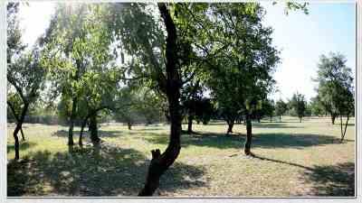 Lampasas County Farm & Ranch For Sale: 2455 Fm 1715