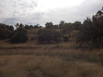 Comfort Residential Lots & Land For Sale: 126 Dripping Spring