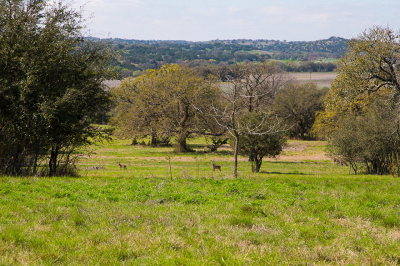 Kerrville Residential Lots & Land For Sale: 1076 Pinnacle View Dr