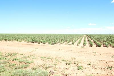 Lubbock Farm & Ranch For Sale: Farm Road 2528