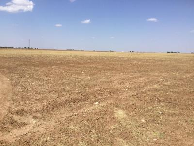 Lubbock County Residential Lots & Land For Sale: 18402 County Road 2300