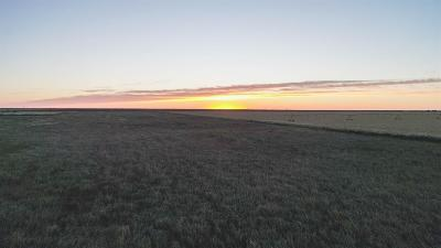 Bailey County, Lamb County Farm & Ranch Under Contract: 1249 Farm Road 54