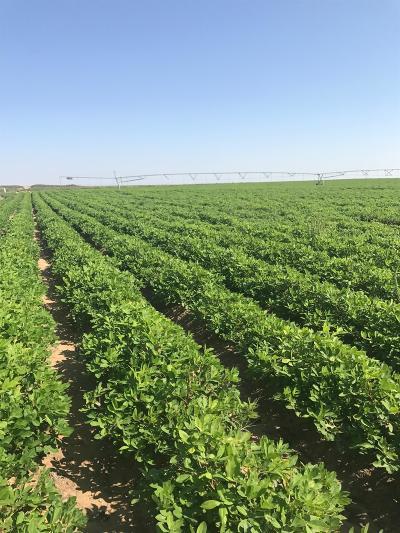 Morton TX Farm & Ranch Under Contract: $1,817,575