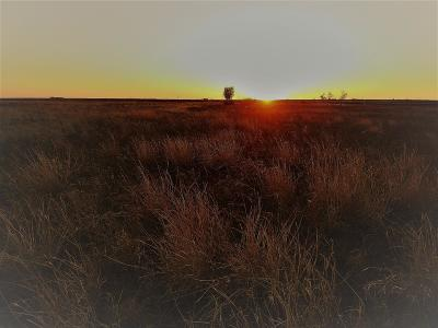 Lubbock County Residential Lots & Land For Sale: 20906 Farm Road 1730