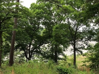 Gladewater TX Residential Lots & Land For Sale: $229,900