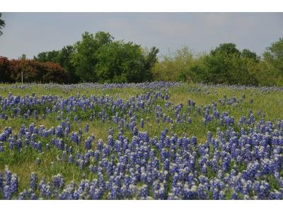 Grand Prairie Residential Lots & Land For Sale: 9212 Hidden Lakes Court