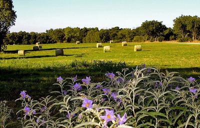 Fort Worth Farm & Ranch For Sale: 0000 Highway 377