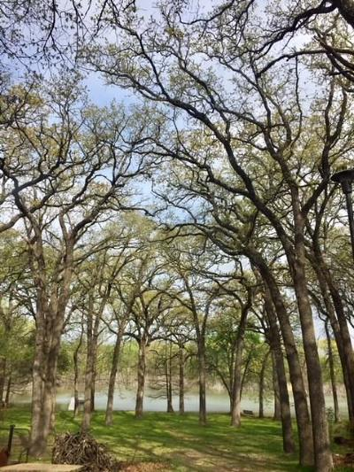 Fort Worth Single Family Home For Sale: 9600 Heron Drive