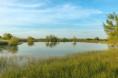 Decatur Farm & Ranch For Sale: County Road 4511