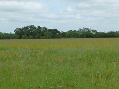 Brownwood Farm & Ranch For Sale: Fm 1849
