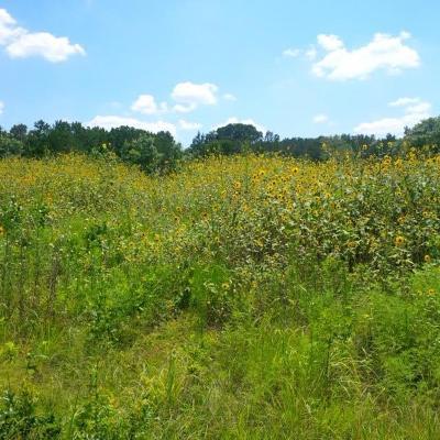Hood County Farm & Ranch For Sale: Tbd Fm 205