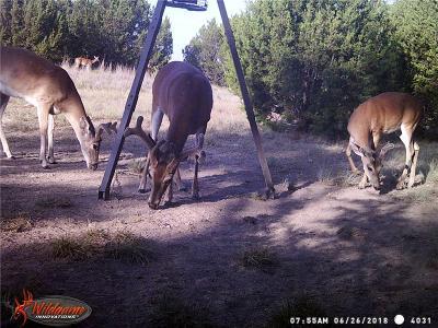 Goldthwaite Farm & Ranch For Sale: 236 E Fm 572