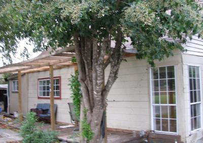McKinney Single Family Home For Sale: 1109 Moore Street