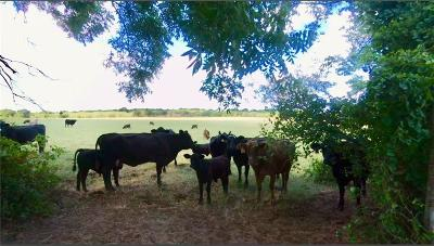 Farm & Ranch For Sale: Cr 398