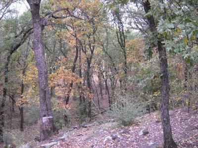 Pilot Point Farm & Ranch For Sale: Old Alton/Coppercanyon