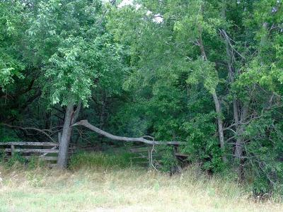 Collin County Farm & Ranch For Sale: Tbd Fm 1377