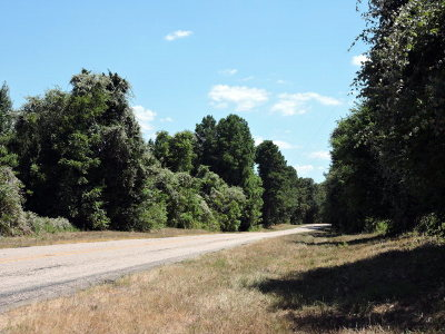 Anderson County Residential Lots & Land For Sale: 000 Fm 19