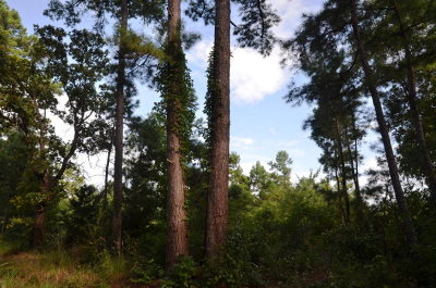 Anderson County Residential Lots & Land For Sale: Fm 322