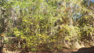 Anderson County Residential Lots & Land For Sale: 000 Anderson County Road 354
