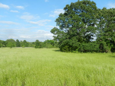 Leon County Residential Lots & Land For Sale: 000 NW Leon County Rd 234