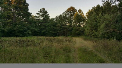 Anderson County Residential Lots & Land For Sale: 6149 Fm 19