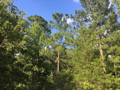 Anderson County Residential Lots & Land For Sale: 00 Acr 2405