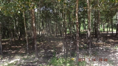 Palestine TX Residential Lots & Land For Sale: $76,960