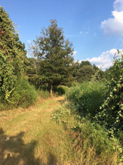 Anderson County Residential Lots & Land For Sale: 00 St. Hwy 155