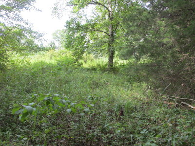 Residential Lots & Land For Sale: 00 Fm 2574