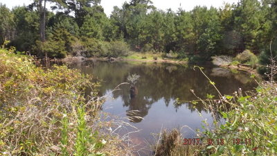 Palestine TX Residential Lots & Land For Sale: $399,900