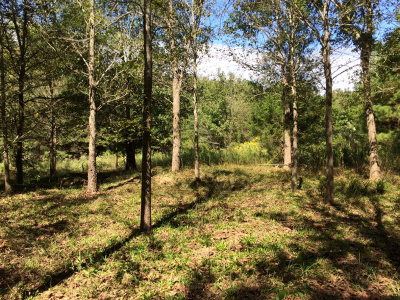 Anderson County Residential Lots & Land For Sale: 000 Acr 3194