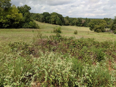 Anderson County Residential Lots & Land For Sale: 1079 Anderson County Road 328