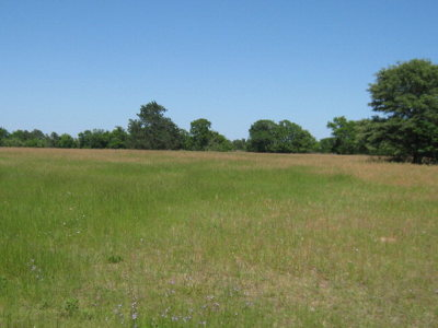 Anderson County Residential Lots & Land For Sale: 5301 County Road 314