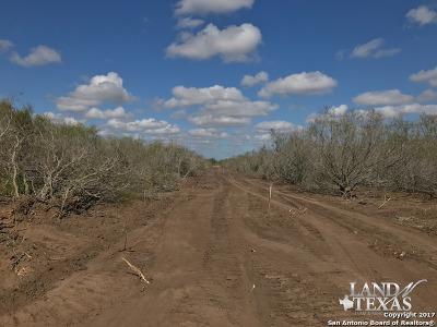 Farm & Ranch New: 393 County Road 129